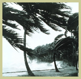 hurricane palms with gold border.jpg